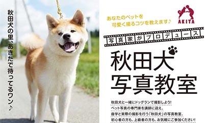 モデルが秋田犬の写真教室?いま秋田犬の活躍がすごい!