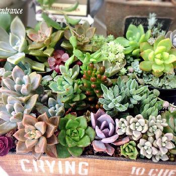 100均で買える安くて素敵な観葉植物をお部屋に飾ってみよう!