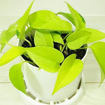 室内でも育てやすい観葉植物は?