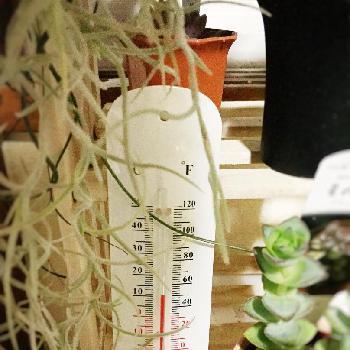 冬でも安心!耐寒性の強い観葉植物