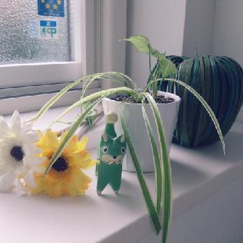 マンションで育てやすい小型観葉植物ベスト3