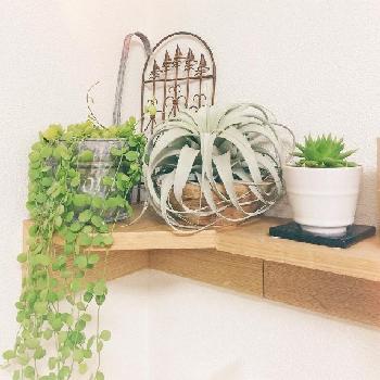 通販で簡単に手に入る!インテリアにぴったりな観葉植物