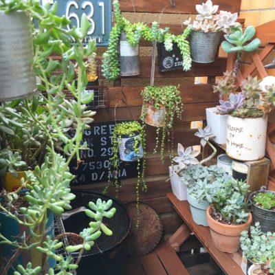 観葉植物を購入できる通販サイトをご紹介!