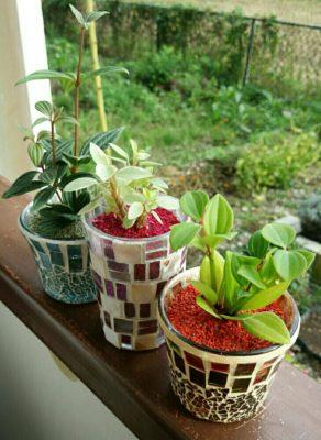 観葉植物をハイドロカルチャーで育ててみよう!