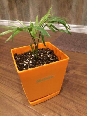 プレゼントに観葉植物を渡す際の選択肢