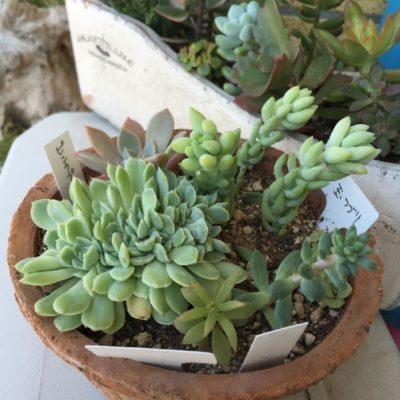 観葉植物の鉢カバー