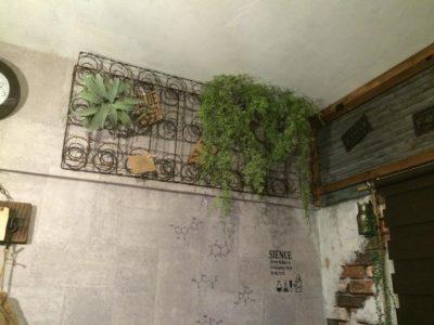 観葉植物を激安で買える通販をご紹介!