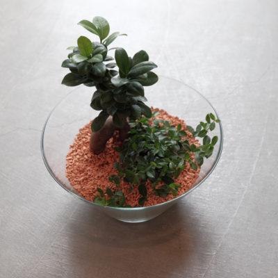 レア・希少な観葉植物3選!