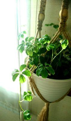 リビングをおしゃれに演出してくれる観葉植物3選