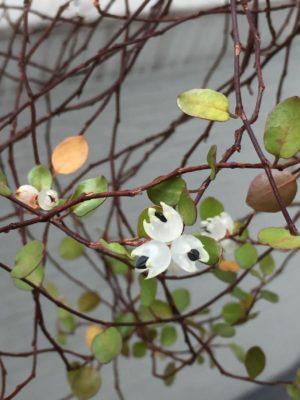テラス、ベランダに最適!外でも育つ観葉植物