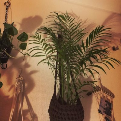 これで気軽に始めてみよう!100均で買える格安観葉植物
