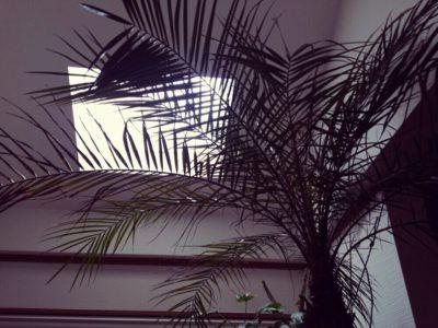 お部屋にもっと緑を!大きめのおすすめ観葉植物