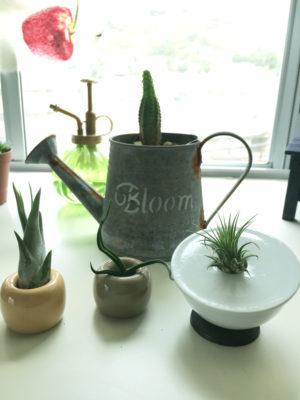 育てやすくておしゃれな観葉植物が買える通販サイトのご紹介!