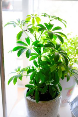インテリアにぴったりな小さい観葉植物とは?