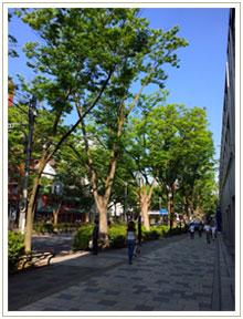 朝の表参道、こんなに広々歩ける贅沢