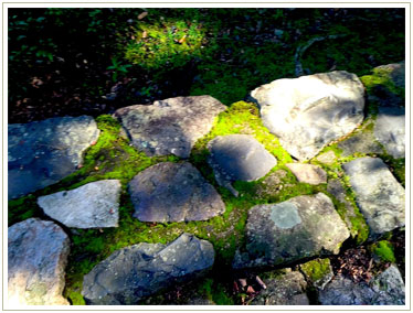 石段ごと大きな盆栽のようです。木漏れ日のコントラストでさらに輝く苔たち