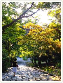 場所によって違う葉の色。秋がまばらに宿っています