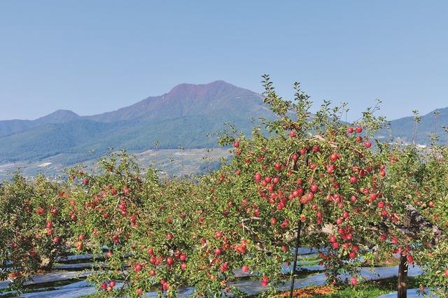 03_山ノ内町のりんごの果樹園