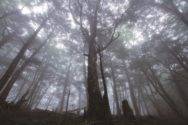 P9_櫛形山の原生林 小.jpg