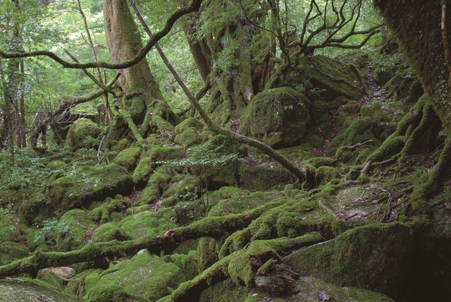 P12 苔むす森