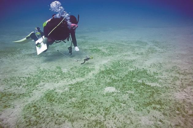 630 P8_海草藻場の食み跡