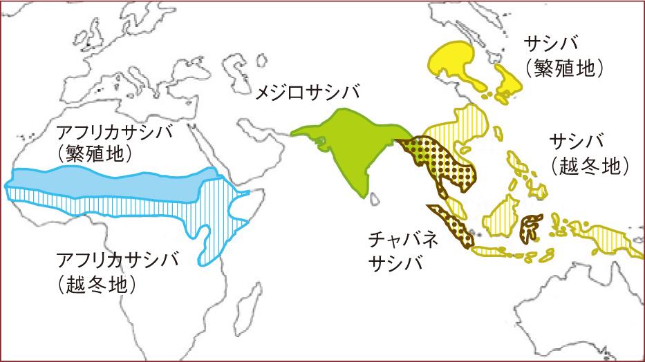 sashibatokusyu3