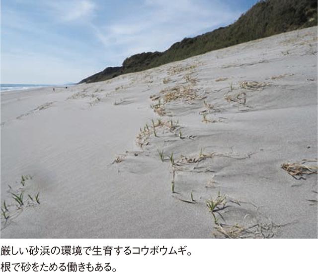 自然を感じる「砂浜のあるき方」をご紹介