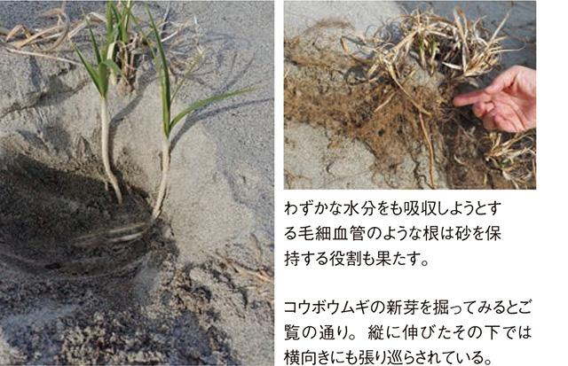 砂浜3_3