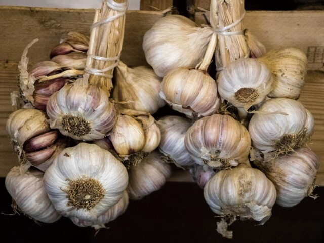 K10_garlic_harvest_2_1578635117