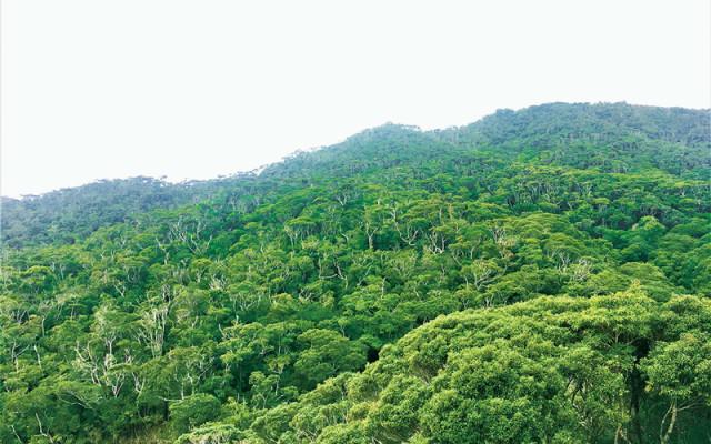 世界自然遺産。奄美大島、徳之島、沖縄島北部及び西表島