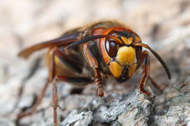 ブヨ、スズメバチ、ムカデ、蚊……キャンパー泣かせの「キケンな虫」