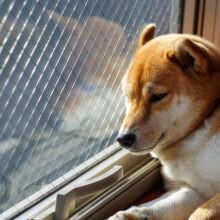 犬の暑さ対策は必須!さまざまな工夫で夏を乗り切ろう