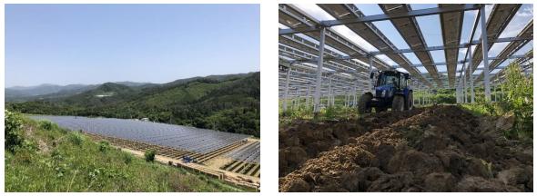 リニューアブル・ジャパンなど3社、営農型の「一関市吉高太陽光発電所」が完成