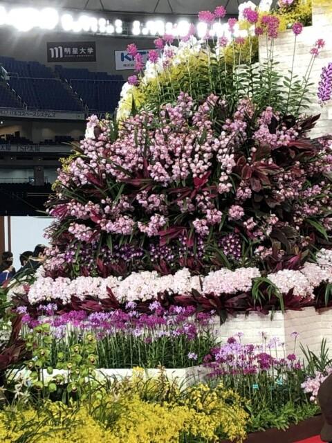 [ラン]イベントレポート:世界らん展2019ー花と緑の祭典