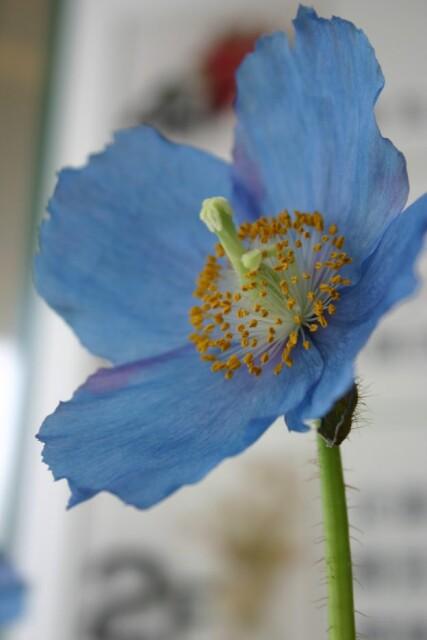 [花の色]あなたの見ている花の色は……