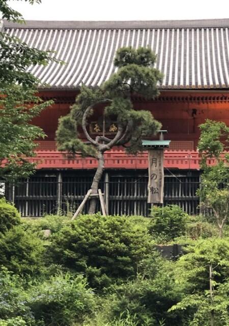 """古今東西ご神木巡礼。清水観音堂の""""月の松"""""""
