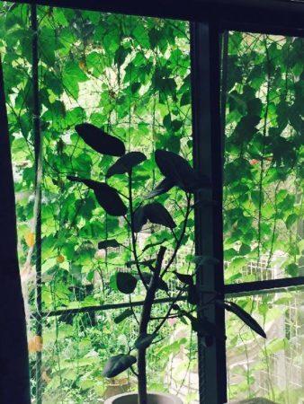 初心者も育てやすい!琉球オモチャウリの肥料や水やりをご紹介!