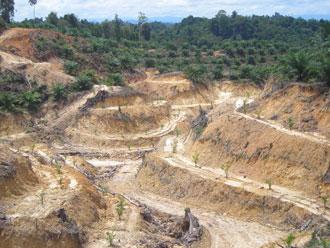 サラワク州のアブラヤシ農園開発の様子-うっそうとした熱帯林が「緑の砂漠」に