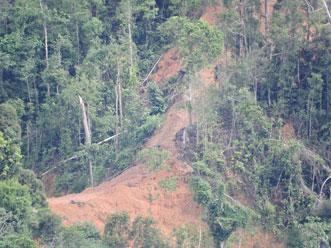サラワク州奥地での伐採の様子:急斜面の伐採道敷設は禁止のはずだが・・