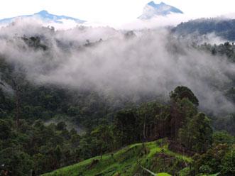サラワク州奥地:朝靄がかかる豊かな熱帯林本来の様子