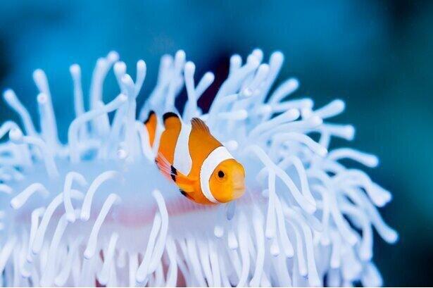 オスからメスへ、メスからオスへ性転換する魚がいる
