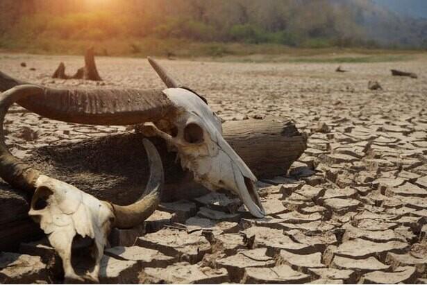 大量絶滅期に匹敵するペースで生物種が失われている