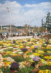 「国際花と緑の博覧会」の花桟敷