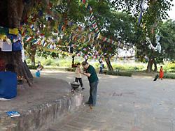 「ルンビニ」の菩提樹のまえで祈りをささげる淀野さん