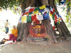 菩提樹の祭壇そばに座る僧侶