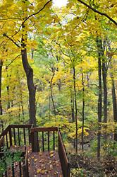 オハイオ州の自宅の裏庭