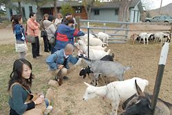ボールダー研修でヤギ牧場見学