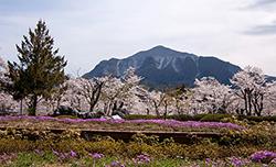 日本の伝統美が息づく「秩父銘仙」