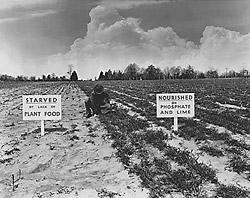 1940年代の化学肥料を宣伝する写真