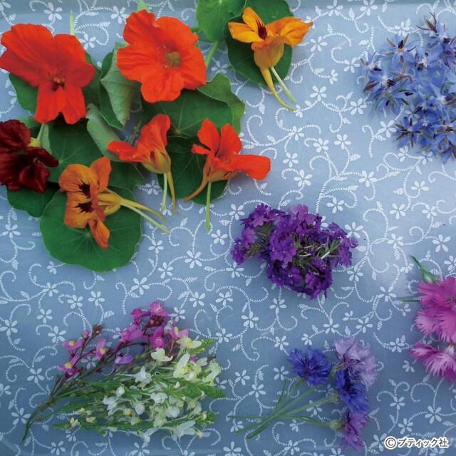 食べられる花を楽しむ!エディブルフラワーの育て方